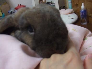 2007_0915buraidaru20117