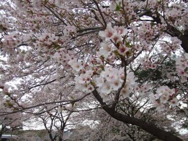 2007_0423ikaho0070