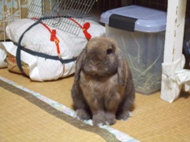 2008_1026karuizawa0206