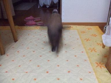 2009_0815rabennda0034
